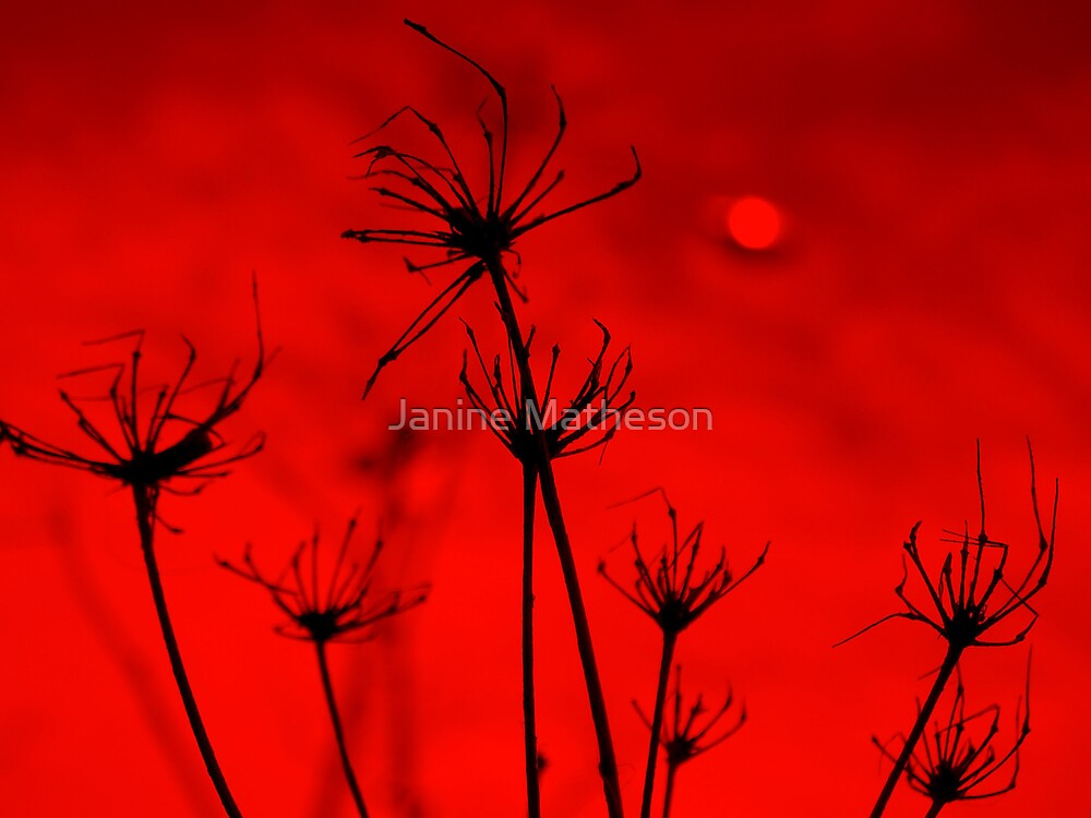 red skies by Janine Matheson