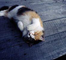 Pretty Kitty by Crockpot