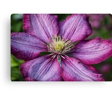 Pink Clematis - Macro Photography Canvas Print