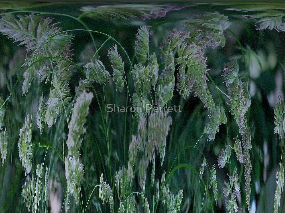 Grass gone wild by Sharon Perrett