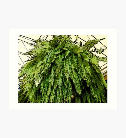 Comic Abstract Fern Art Print