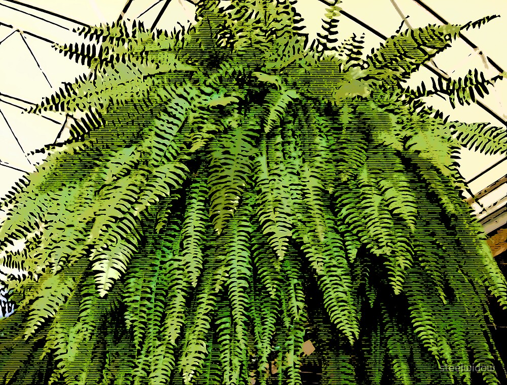 Comic Abstract Fern by steelwidow