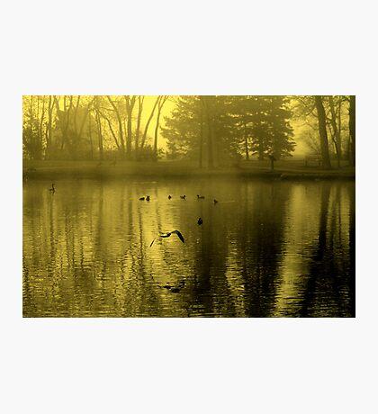 Golden Mist Photographic Print