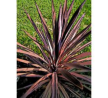 Comic Abstract Spike Plant Photographic Print