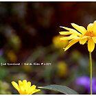 Feel the Sunshine by TalithaCumi