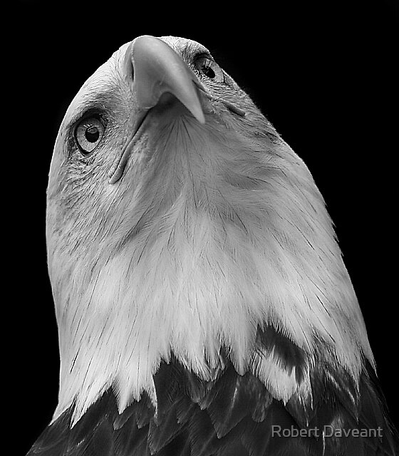 Eagle Portrait #2 by Robert Daveant