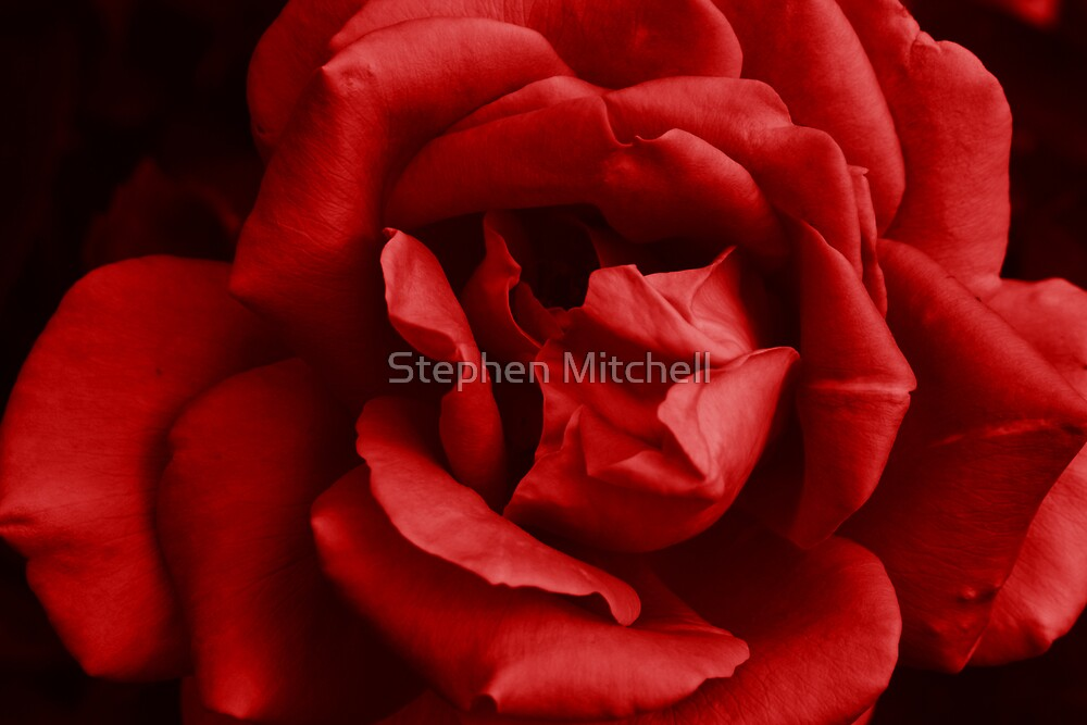 Big Red by Stephen Mitchell