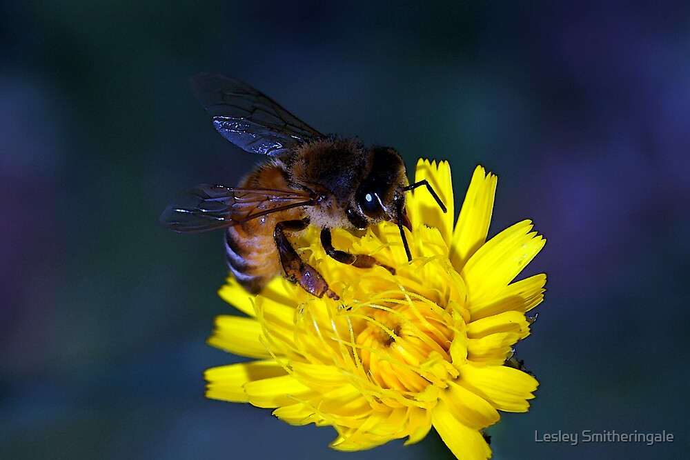 Yellow Nectar Feast by Lesley Smitheringale