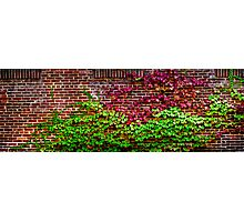 Ivy and brick Photographic Print