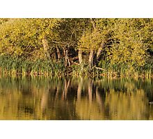 Autumn reflections in water Photographic Print