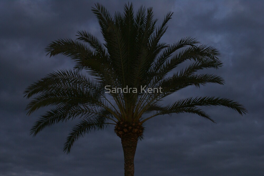 Palm Trees by Sandra Kent