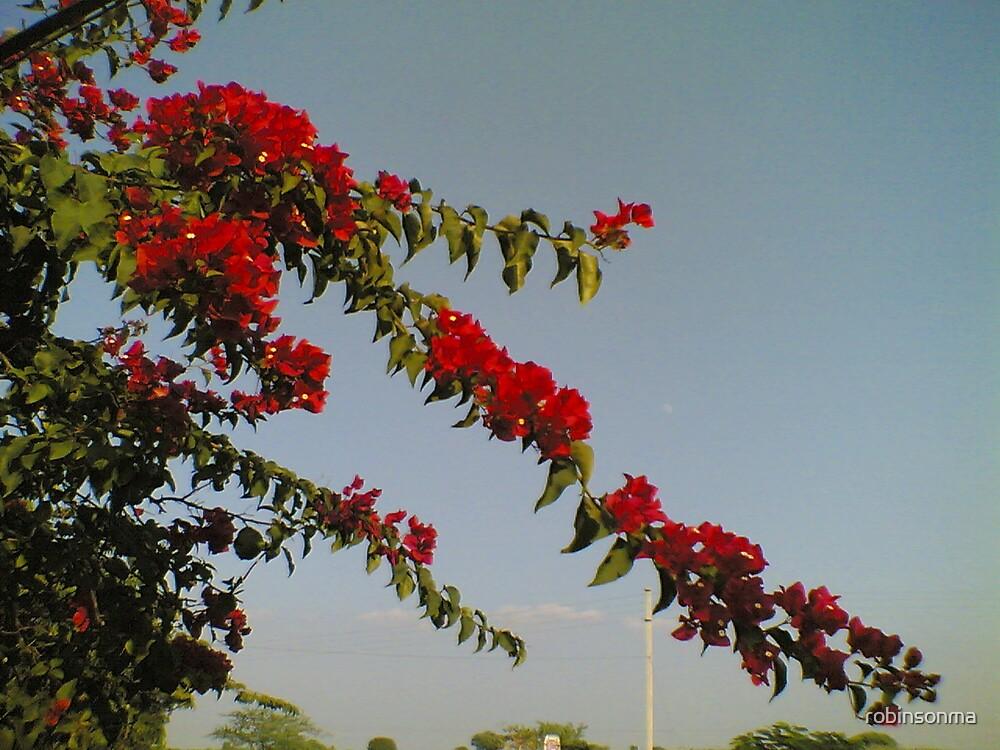 Flower by robinsonma