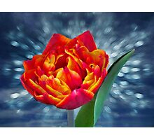 Tulip On Stage Photographic Print