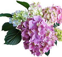 Pastel Hydrangea by Susan Savad