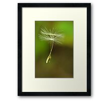Seeds of Peace Framed Print