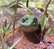 Smiling Frog by Michelle Jarvie
