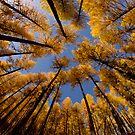 Tamaracks by Nick Johnson