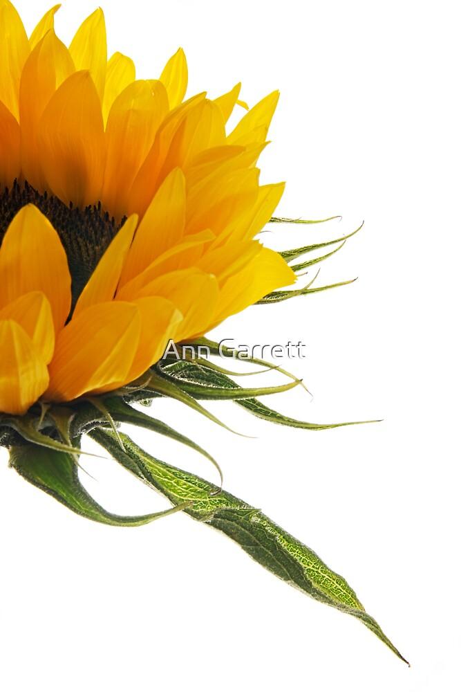 Half a Sunflower by Ann Garrett