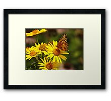 Oranges and Yellows Framed Print