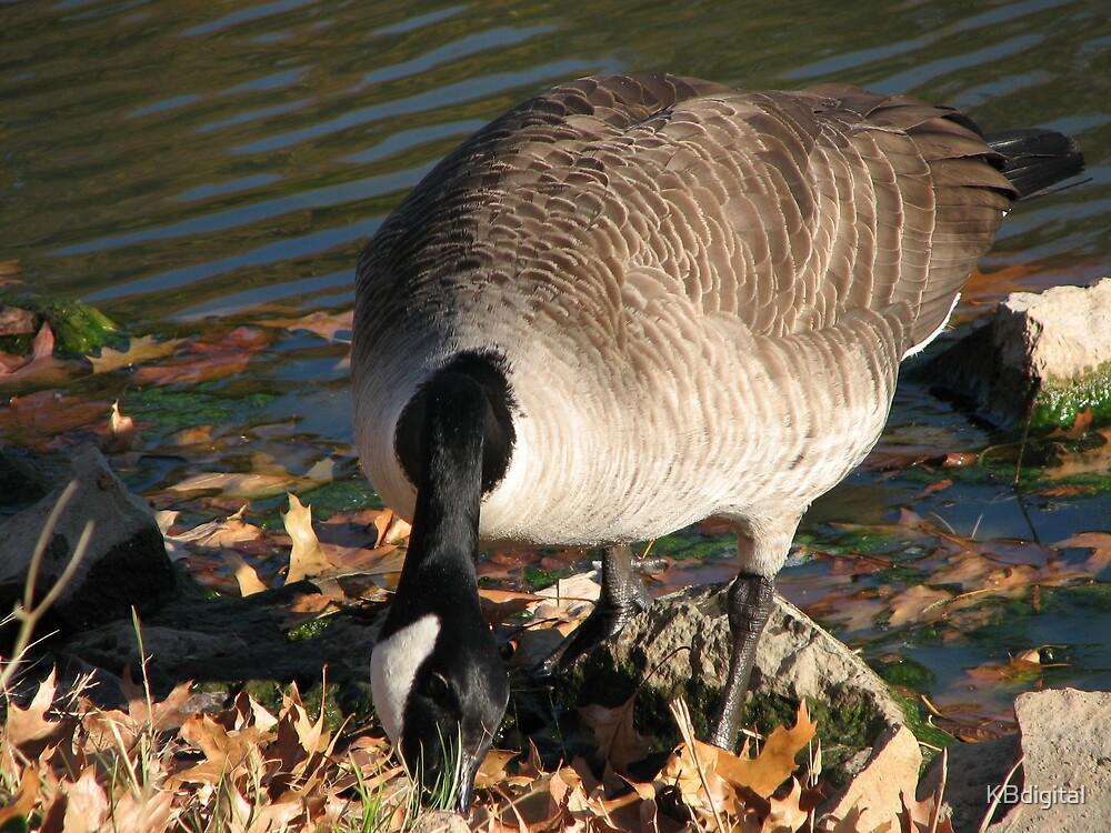 The Goose by KBdigital