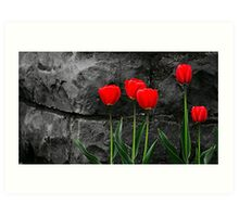 Five Tulips Art Print
