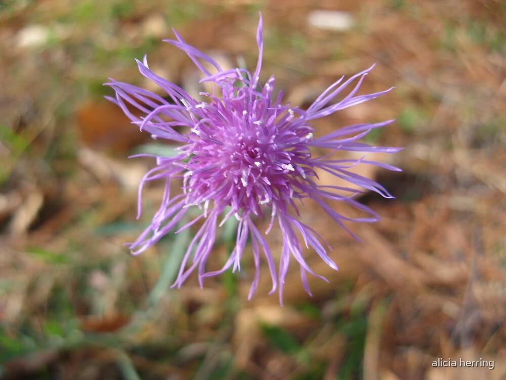 Tiny Purple Flower by alicia herring