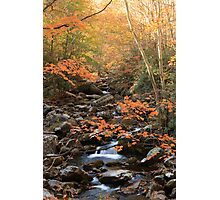 Nature's Splendor  Photographic Print