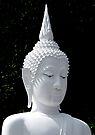 White Buddha by Dave Lloyd