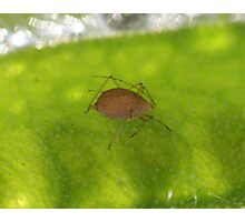 Brown aphid Photographic Print