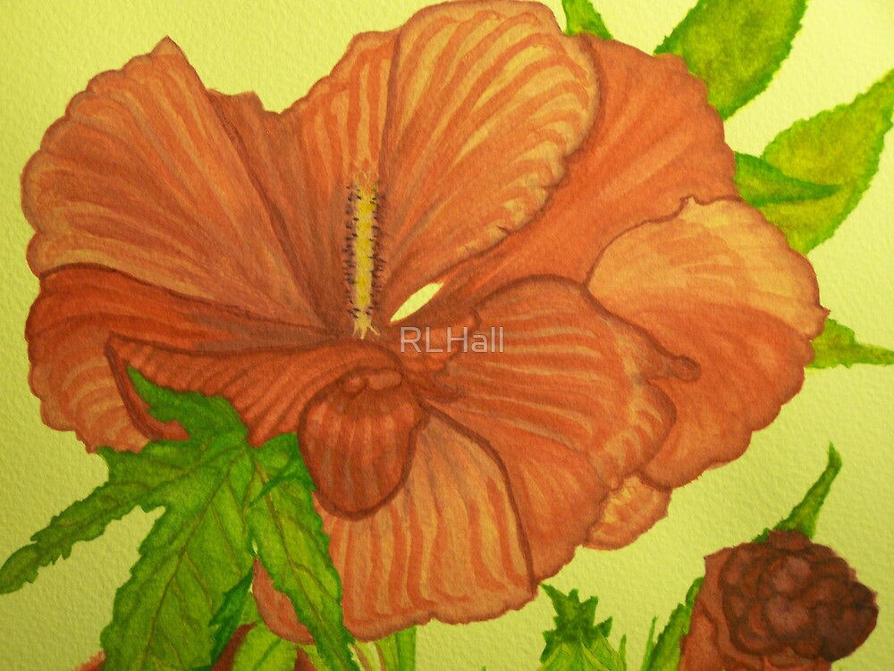 Hibiscus by RLHall