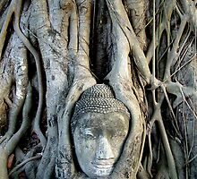 Buddha Face In Tree by Dave Lloyd