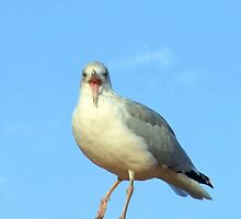 Seagull on the Rooftop by Pauline Jones