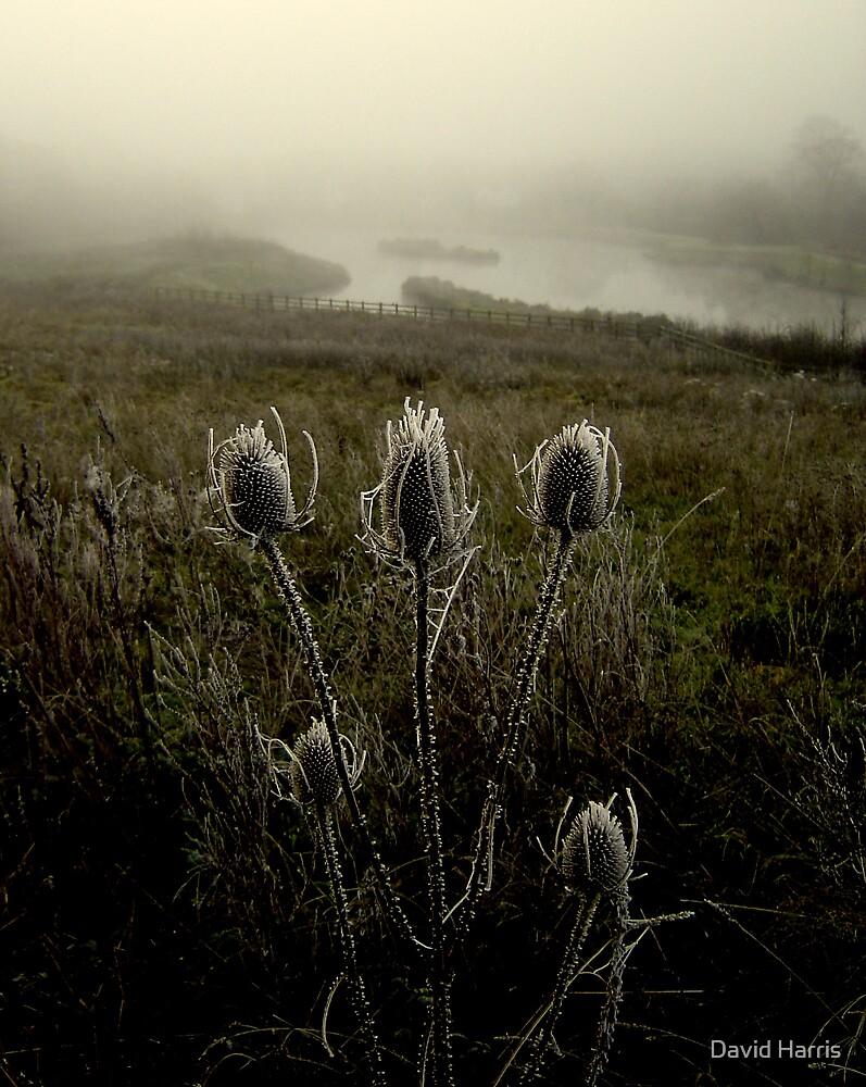 Freezing Teasle by David Harris
