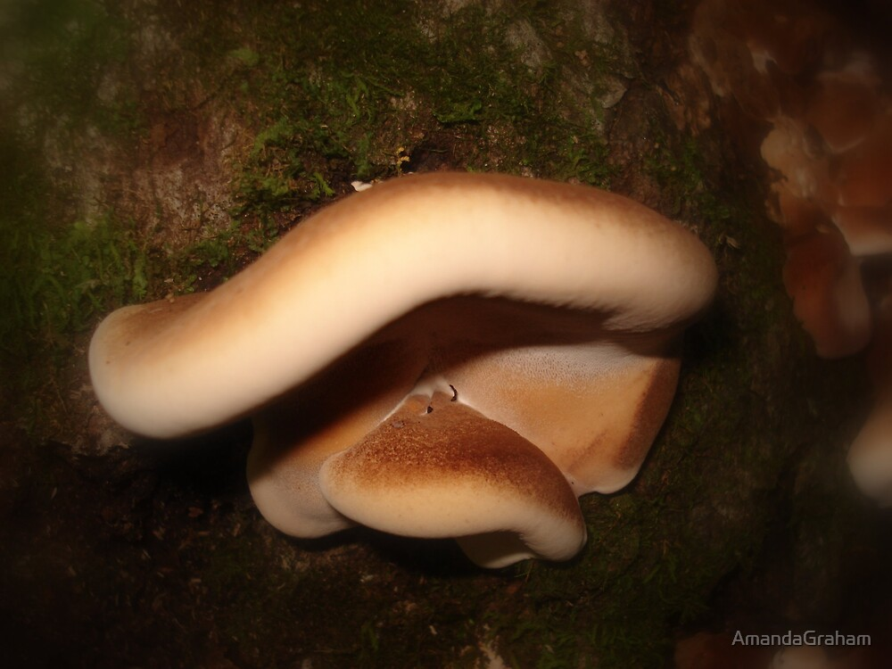 Soft fungi by AmandaGraham
