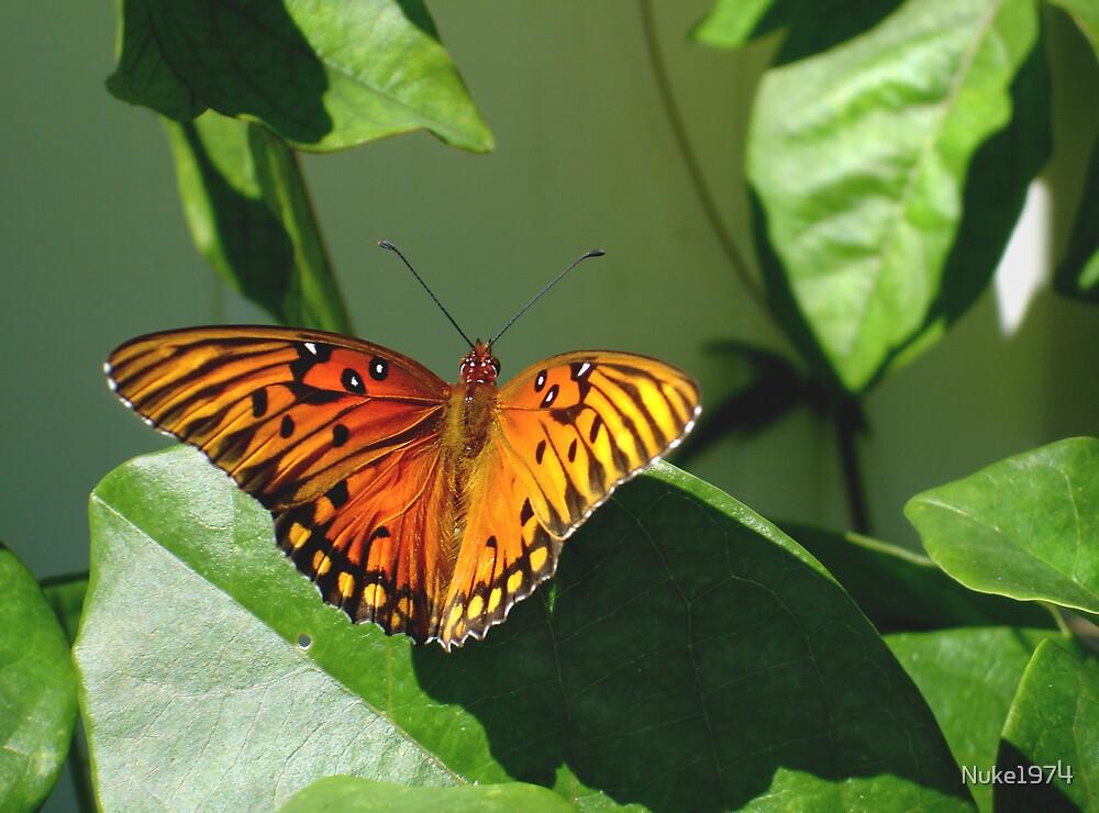 Butterfly Beauty  by Nuke1974