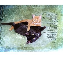 Cats know-inspiration Photographic Print