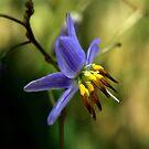 Flax-Lily by margotk