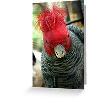 Gang Gang Cockatoo Greeting Card