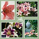 Lily Photo Collage  by Sandra Foster