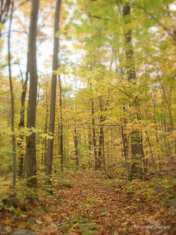 Autumn walk by AmandaGraham