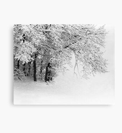 Snowy Trees Canvas Print
