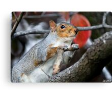Oh Please,  Let There Be Peanuts. Canvas Print
