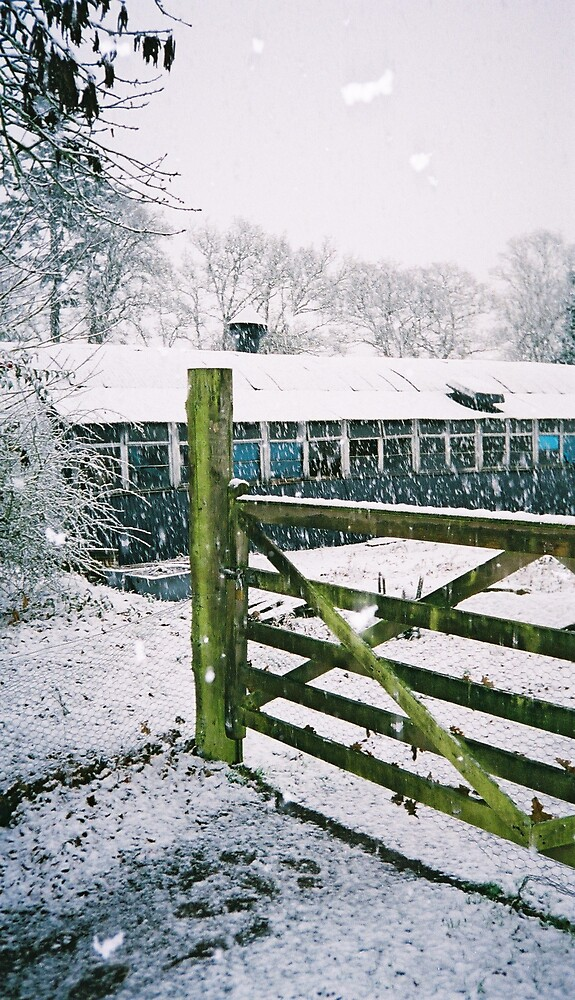 Snow falling on gate posts by Lisa Trainer