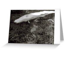 Beluga Sidestroke Greeting Card