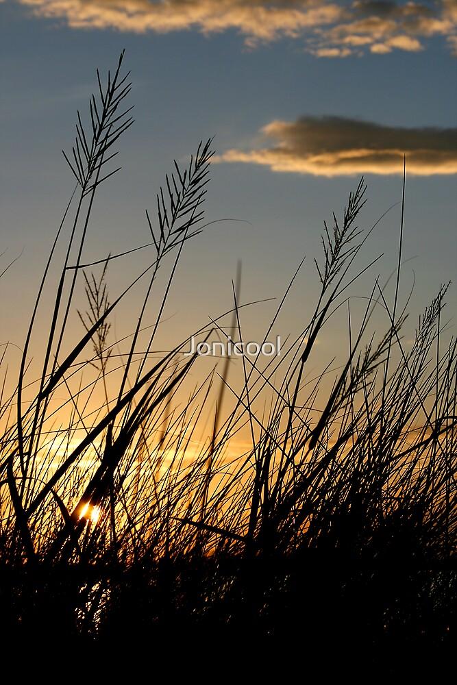 Bayou Grass by Jonicool