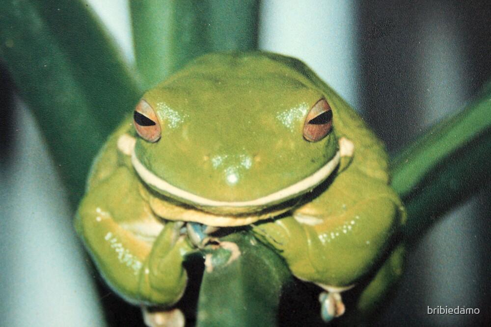 Frog by bribiedamo