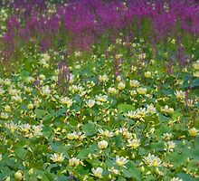 Great Lotus Meadow by Owed To Nature