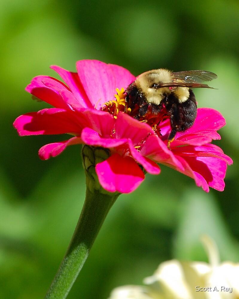 Bee in flower by Scott A. Ray