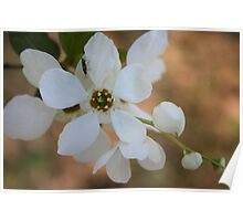 White Flower Little Bug Poster