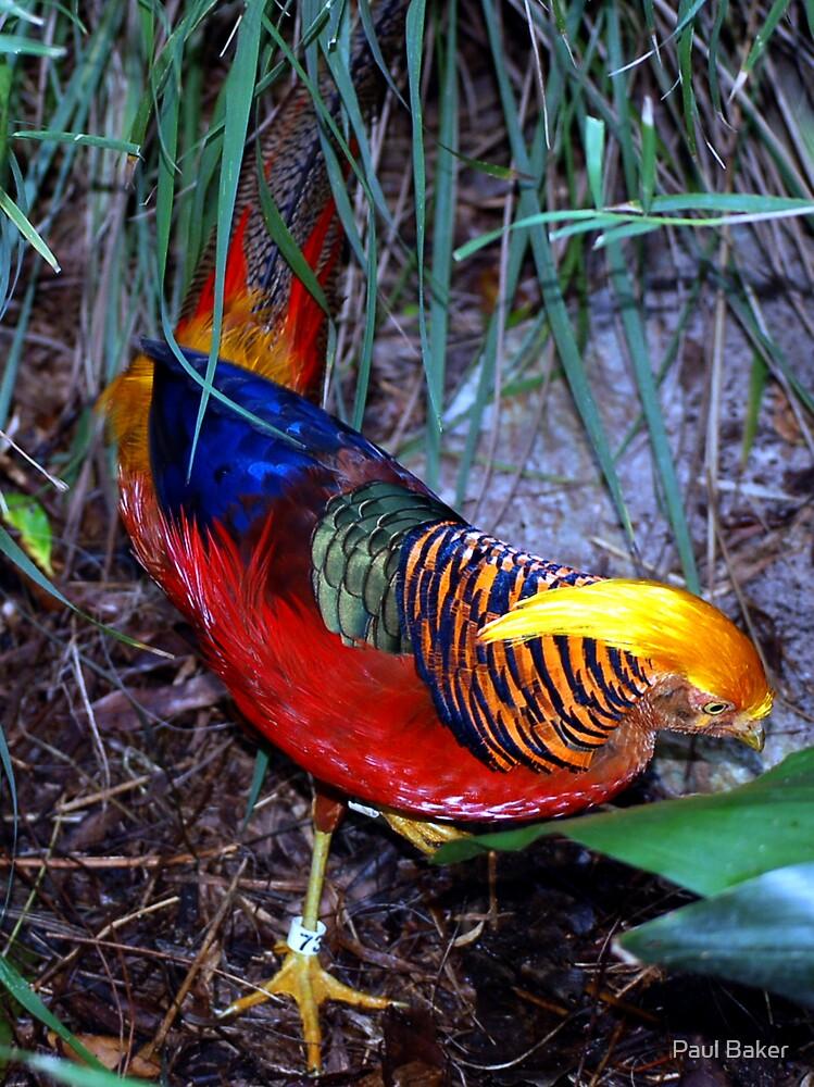 Rainbow Wings by Paul Baker